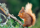 MAM 24 WF0014 01