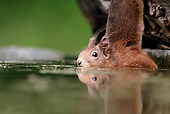 MAM 24 WF0016 01