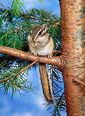 MAM 24 KH0003 01