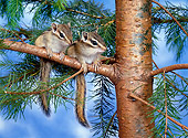 MAM 24 KH0004 01