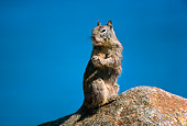 MAM 24 RK0005 01