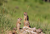 MAM 24 TL0002 01
