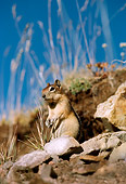 MAM 24 TL0003 01