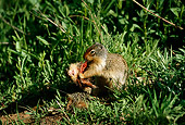 MAM 24 TL0005 01