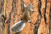 MAM 24 TL0006 01