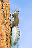MAM 24 TL0008 01