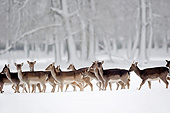 MAM 25 AC0002 01