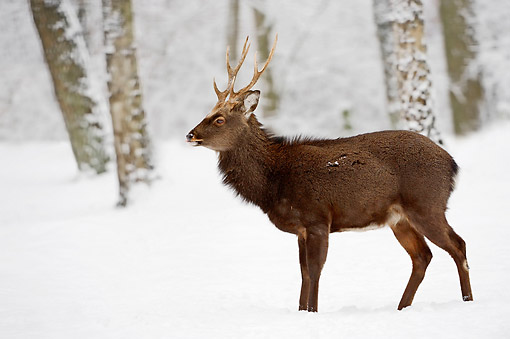 MAM 25 AC0011 01