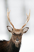 MAM 25 AC0012 01