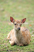 MAM 25 AC0015 01