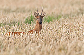 MAM 25 AC0019 01