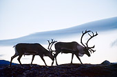 MAM 25 BA0001 01