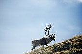 MAM 25 BA0002 01