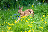 MAM 25 GL0001 01