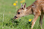 MAM 25 GL0004 01