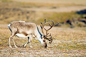 MAM 25 SK0005 01