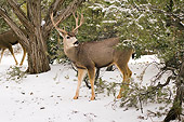 MAM 25 SK0006 01