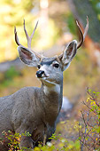 MAM 25 WF0001 01
