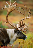 MAM 25 DB0002 01