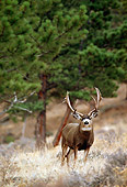 MAM 25 RF0013 01