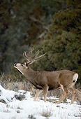 MAM 25 RF0014 01