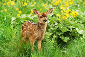 MAM 25 RW0002 01