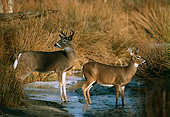 MAM 25 TL0006 01