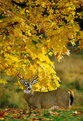 MAM 25 TL0008 01