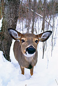 MAM 25 TL0013 01