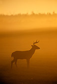 MAM 25 TL0015 01