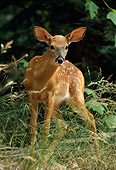 MAM 25 TL0017 01
