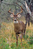 MAM 25 TL0018 01