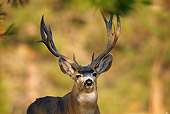 MAM 25 TL0020 01