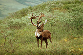 MAM 25 TL0025 01