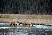 MAM 25 TL0031 01