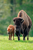 MAM 26 AC0002 01