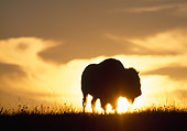 MAM 26 LS0001 01