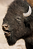 MAM 26 MC0001 01