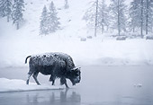 MAM 26 MC0002 01
