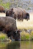 MAM 26 MC0003 01