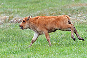 MAM 26 RW0002 01