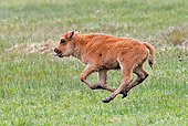 MAM 26 RW0003 01