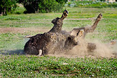 MAM 26 TL0029 01