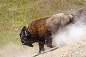MAM 26 TL0032 01