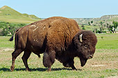 MAM 26 TL0033 01