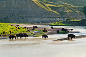 MAM 26 TL0038 01