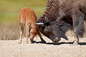 MAM 26 TL0039 01