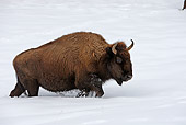 MAM 26 WF0007 01
