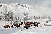 MAM 26 WF0009 01