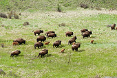 MAM 26 WF0010 01